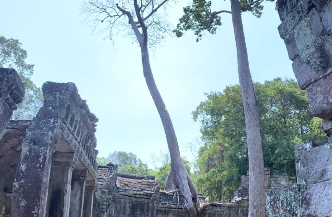Image of Cambodia Tree Temple